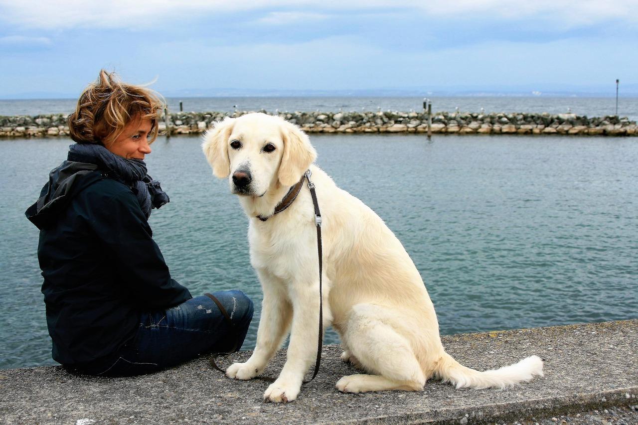 formation  u00e0 distance pour devenir  u00c9leveur canin et f u00e9lin